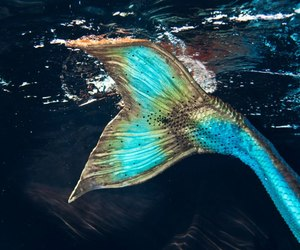 mermaid, sea, and tail image