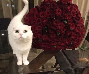 cat, rose, and flowers image