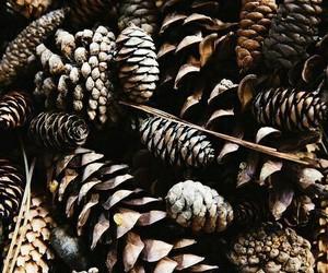 christmas, dark, and feed image