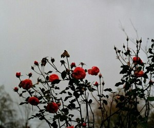 badweather, red, and roses image