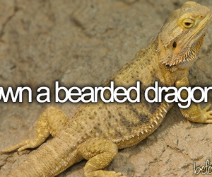 -things i want to do and -bearded dragon image