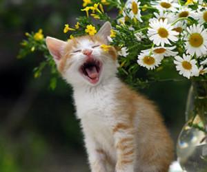 cat, bestcapturesaoi, and artofimages image
