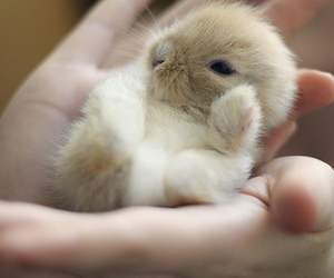 bunny, cute, and love image