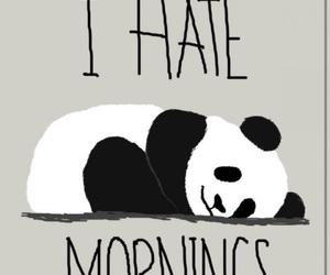 panda and mornings image