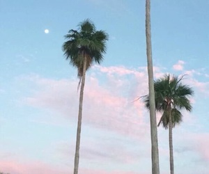 beach, palm trees, and pink image