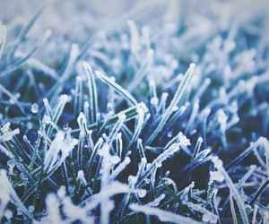 blue, christmas, and cold image