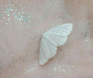 butterfly, pale, and aesthetic image