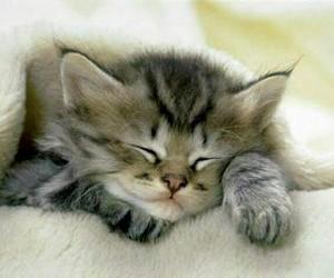 adorable, kitten, and sleepy kitty image