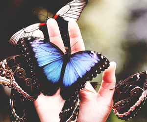 butterfly, wings, and nature image