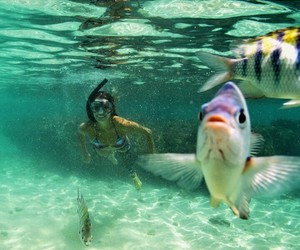 brazil, maragogi, and fish image