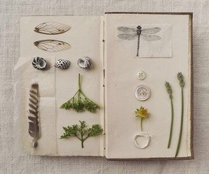 book, buttons, and feather image