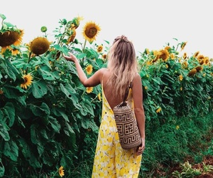 yellow, summer, and sunflower image