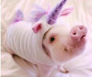 mini, minipig, and outfit image