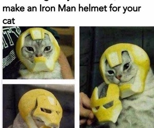 cat, funny, and iron man image