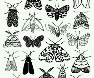beautiful, wallpaper, and butterfly image