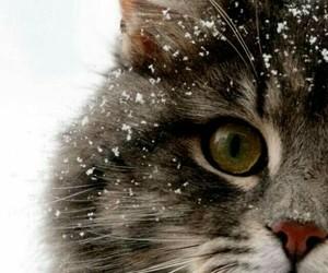 animal, beautiful, and cat image