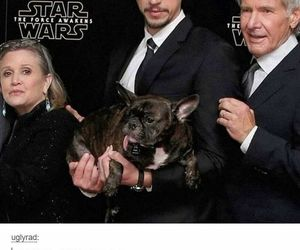funny, han solo, and star wars image