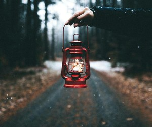 photography, light, and autumn image