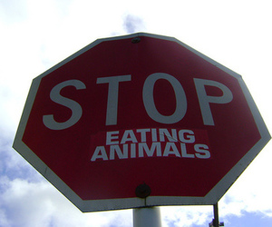 animal, stop, and vegetarian image