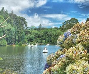 pedalinho, lago negro, and cisne image