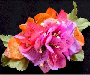 hawaii, colorful, and flower image