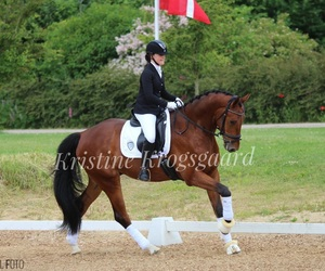 competition, dressage, and girl image