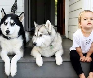 kids, cute, and dogs image