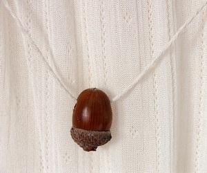 acorn image