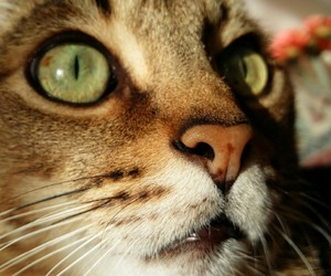 cat, green, and miao image