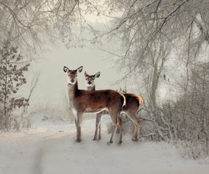 deer, snow, and winter image