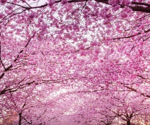 pink, tree, and pink tree image