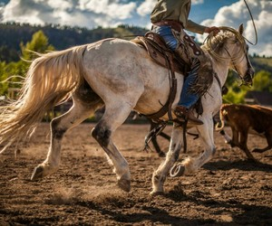 chase, cow, and cowboy image