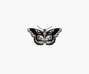 background, butterfly, and moth image