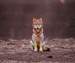 wolf, animal, and gif image