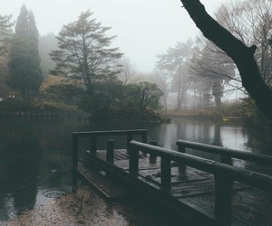 autmn, fog, and water image