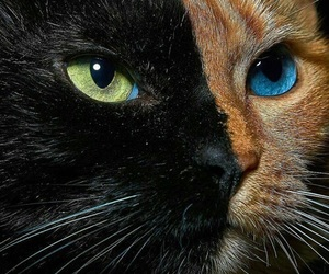 theme, cat, and animal image