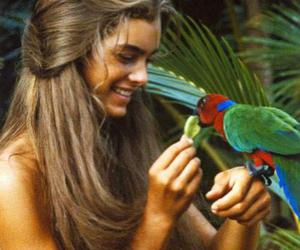 brooke shields and blue lagoon image