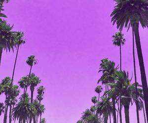 aesthetic, palm trees, and palms image