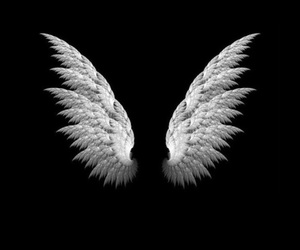 Angel Wings, black & white, and wings image
