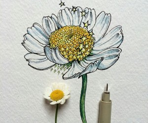 art, flowers, and draw image