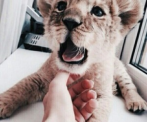 animals, baby lion, and fresh image