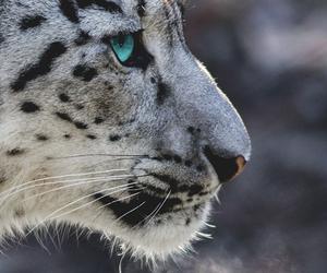 animals, eye, and gray image