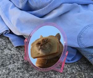 alternative, animal, and cat image