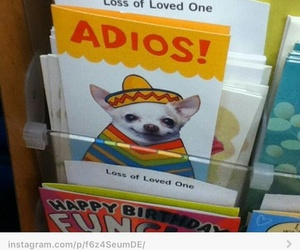 funny, lol, and chihuahua image