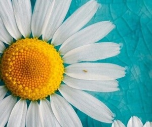 blue and flowe image