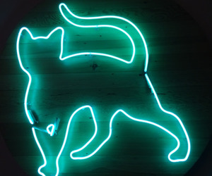 neon, cat, and green image