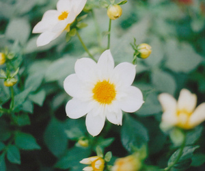 flower, nature, and white image