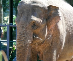 animals, cute, and elefants image