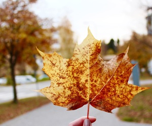 artsy, autumn, and color image