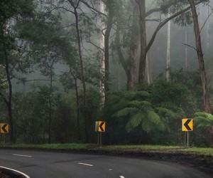 background, forest, and raining image